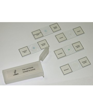 Prepared microscope slides (5 pieces, fungus)